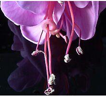 Fuchsia -- Heidi Ann II Photographic Print