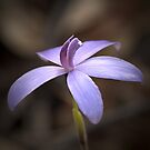 """Little Blue Native Orchid"" by Heather Thorning"
