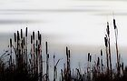 Reedmace against a winter sky by wildscape