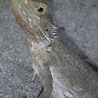 Western Bearded Dragon by Michelle Cocking