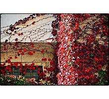 Autumn colours # 5 - The secret  window  Photographic Print