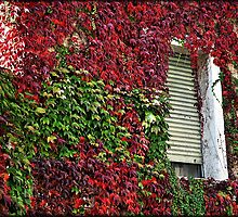 Autumn colours # 4 - The hidden window  by Daniela Cifarelli