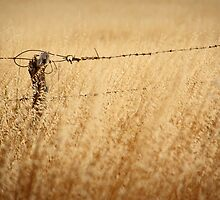 Wild oats & old wire by Steph Ball