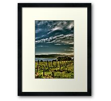 Rosevears Vineyard at Dawn - Tasmania, Australia Framed Print
