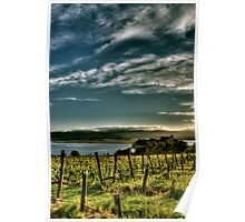 Rosevears Vineyard at Dawn - Tasmania, Australia Poster