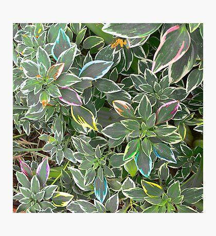 Rainbow Foliage Photographic Print