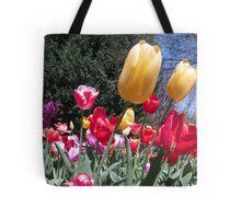 Tulip Time in Australia 7 Photograph  Tote Bag