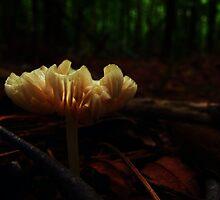 Fairy Light by Lea  Weikert