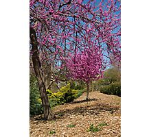 Spring, Oklahoma City, Oklahoma, March 2010 Photographic Print