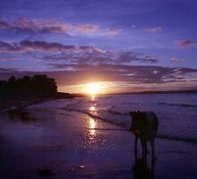 Twilight beach with Indy by Michael Haslam