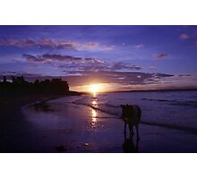 Twilight beach with Indy Photographic Print