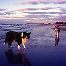 Sunset Border Collies by Michael Haslam