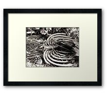 Survival of the Fitest Framed Print