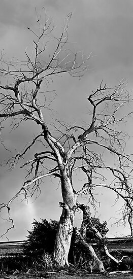 Spirit Tree by Greg Summers