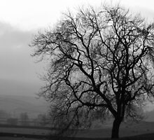 Ash Tree and mist by NSQPhotography