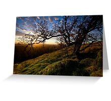 Sun Life Tree Greeting Card