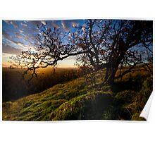 Sun Life Tree Poster