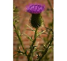 New York City Thistle Photographic Print