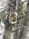 Cozy Up in a Tree! by Barberelli
