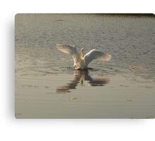 magestic swan Canvas Print