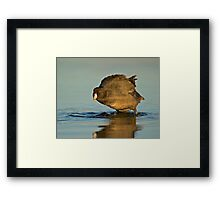 Coot with Attitude Framed Print