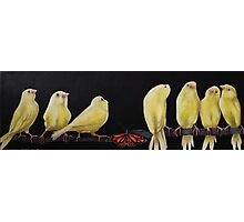 Canary and Butterfly  Photographic Print