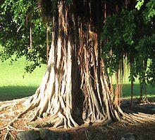 Banyan by ronholiday