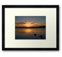 Soaring into the night Framed Print
