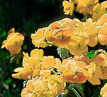 Geraniums by Belinda Osgood