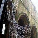 Jewelled Web by Colin Metcalf