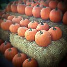 Pumpkins on Display by Judi FitzPatrick