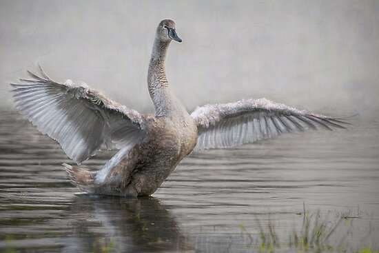 ...and fly away. by Henri Ton
