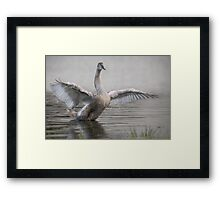 ...and fly away. Framed Print