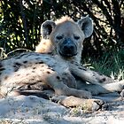 Spotted Hyena by Marylou Badeaux