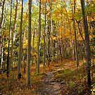 Colorful Fall Trail by Reese Ferrier