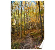 Colorful Fall Trail Poster