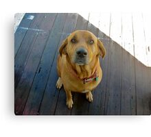 Candy the lab/bloodhound cutie Canvas Print