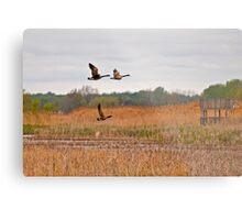 Three Geese in Flight Metal Print