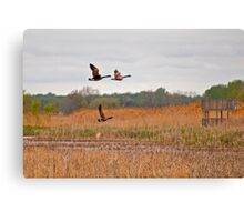 Three Geese in Flight Canvas Print