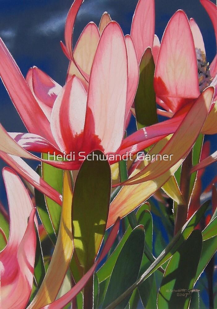 Light and Colour by Heidi Schwandt Garner