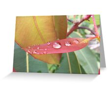 Red Flowering Gum Leaf Greeting Card