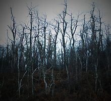 Dying Trees by Brittani Getch