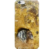 Black and White Periwinkle Shells iPhone Case/Skin