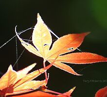An Autumn Leaf by Terry Aldhizer