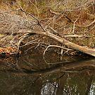 'Ol Tree at Creek's Edge by bicyclegirl