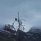Solitary Raven 2 by ArianaMurphy