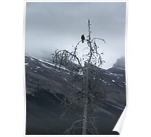 Solitary Raven 3 Poster