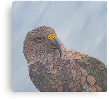 Looking at you - kea Canvas Print