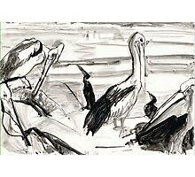 Pelican's Preen 1 Photographic Print