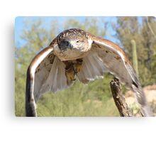 Ferruginous Hawk ~ Spot On! Canvas Print